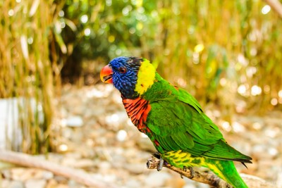 Colorful Bird!!