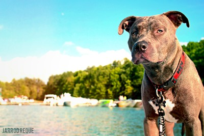 Boat Ride with Roxy