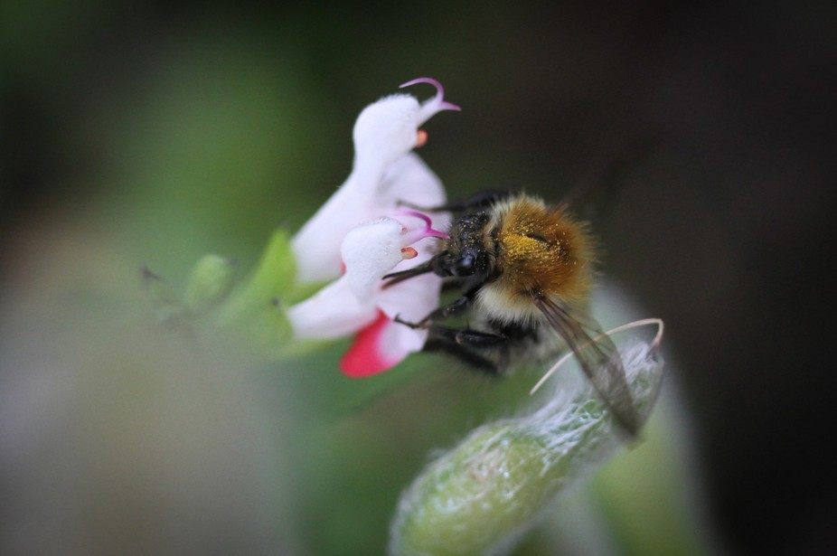 bees  in garden