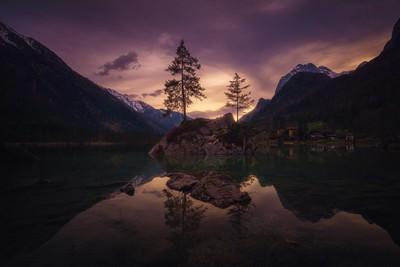 Twilight and trees