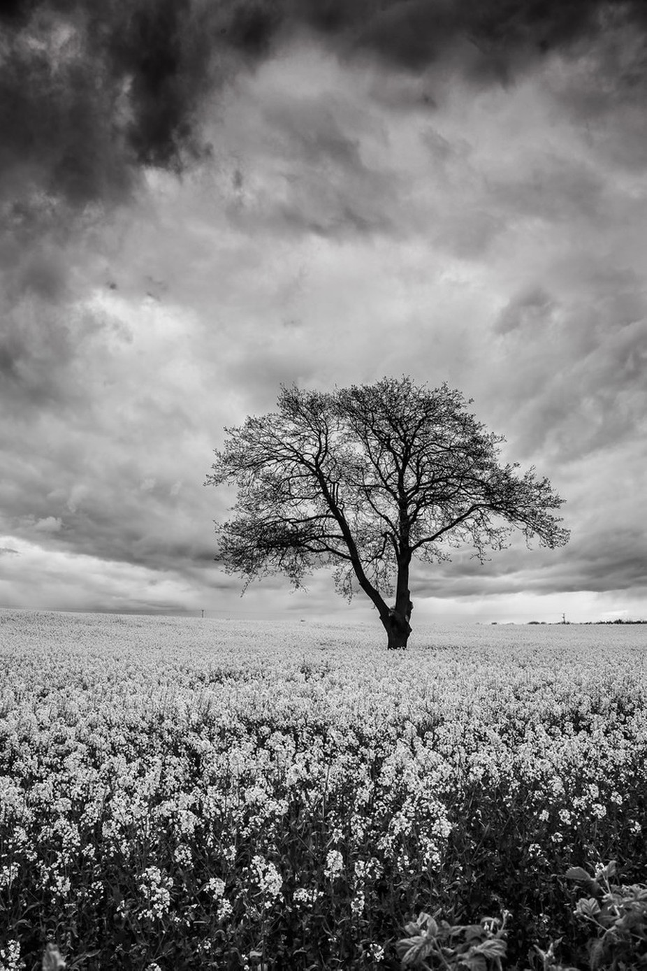 Gainford Monochrome Rapeseed Field (Portrait). by michaelatkinson_5804 - Black And White Landscapes Photo Contest