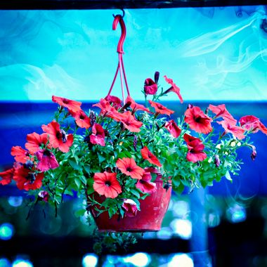 A lovely hanging basket of flowers.