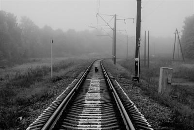 Dog on the Tracks, Poland