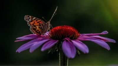 Beuty of the Spring:Butterfly