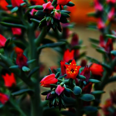 Beautiful vibrant flowers.