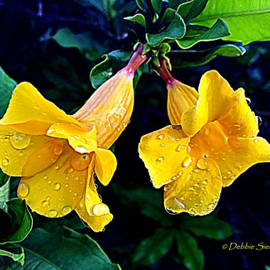 Yellow flowers after the rain...