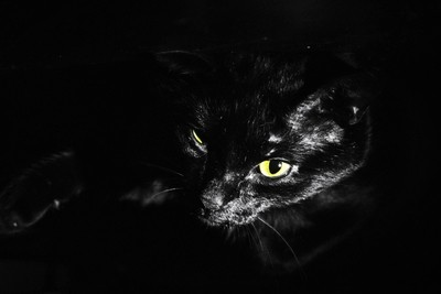 My cat, Nagger.