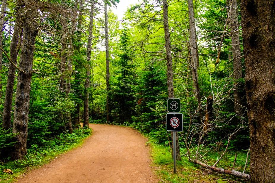 Taken on a beautiful hike in Prince Edward Island