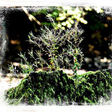 Moss & grass growing on a dead lump of wood.