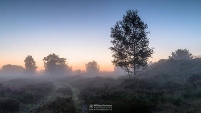Misty Twilight Heather Path