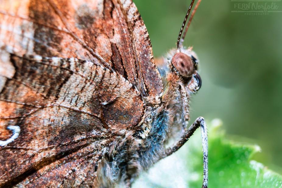 Summertime Butterfly