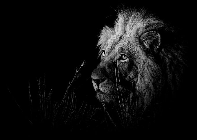 Mapoza Male by Gregmorambo - Explore Africa Photo Contest