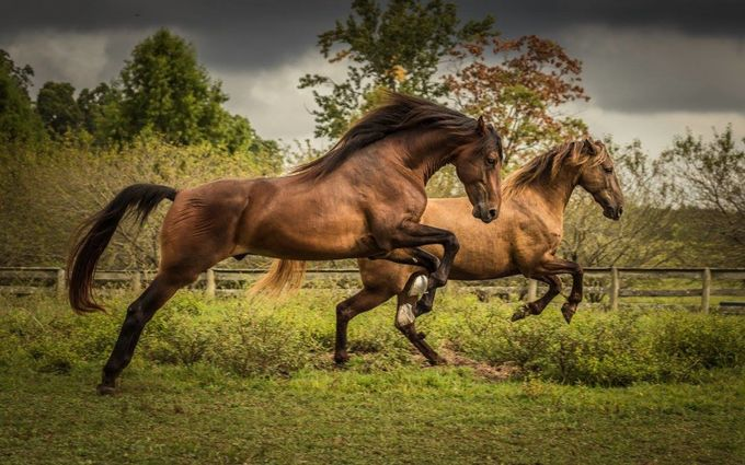 Leap by kathyallison - Farms And Barns Animals Photo Contest