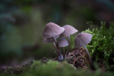 Strange little friends 2