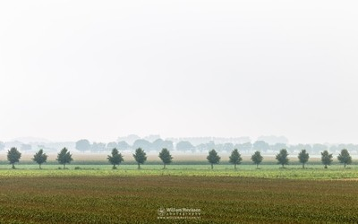 Misty Agricultural Fields