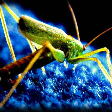 A little Grasshopper on a blanket.