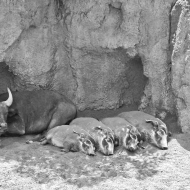 I took this photo when me and family went to Valencia, Spain in the year 2010. We decided to go to the zoo one day and this is one of the photos that I took that day.