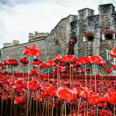 Photo taken at the Tower of London during the Poppy installation.