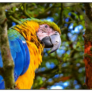 Lovely clourful Parrot at the south Lakes animal park.