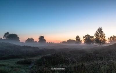Misty Heatherland
