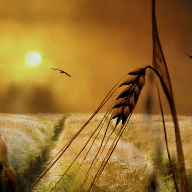 Photo manipulation with Macro Wheat.