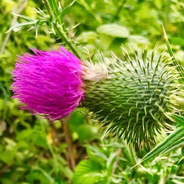 A pop of purple