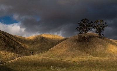 HILLS OF GRACE.     A hand held shot taken very quickly just to capture that light shimmering over the pasture lands near leongatha victoria