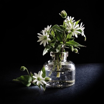 Composition with white flowers.