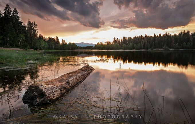 """Elevated"" by Kaisaleephotography - Fallen Trees Photo Contest"