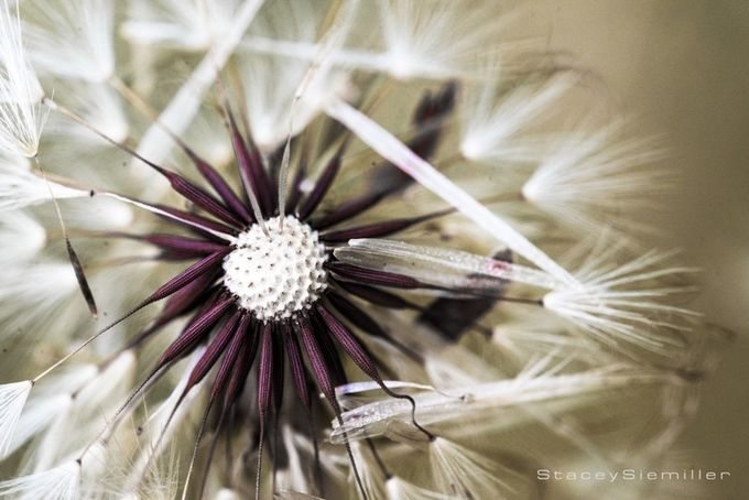 Wishes by StaceyS - Macro Games Photo Contest