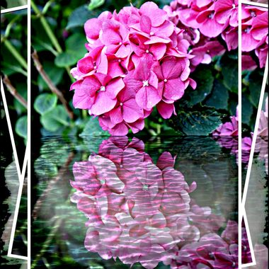 As for the title reflected flowers.