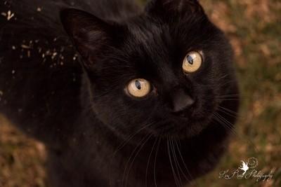 Maya The Cat IMG_5378