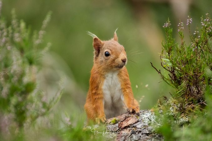 Who me? by howardashton-jones - Small Wildlife Photo Contest