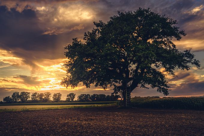 Tree  by HatcatPhotography - Rural Vistas Photo Contest