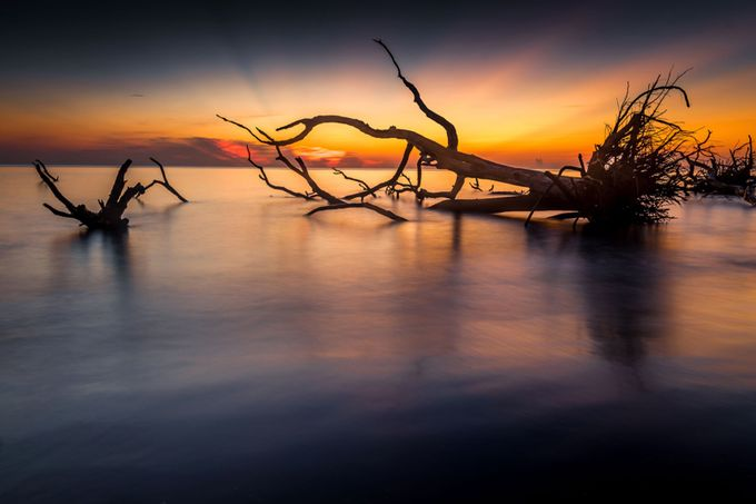 Dawn At Driftwood Boneyard-Big Talbot Island by VirginiaDan - Fallen Trees Photo Contest