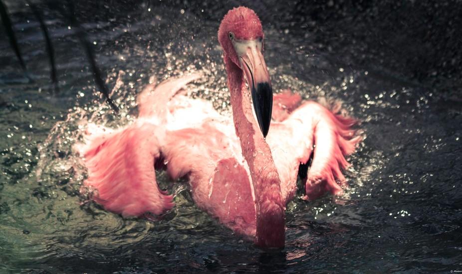 Audubon Zoo-201708181-2