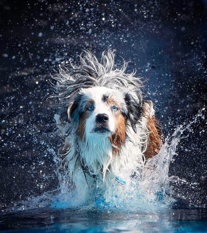 _Z7A0109All Wet by bonjoy - Only Pets Photo Contest