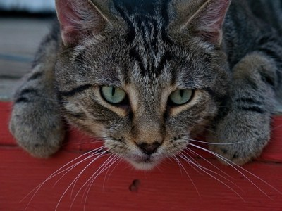 Osborne Cat