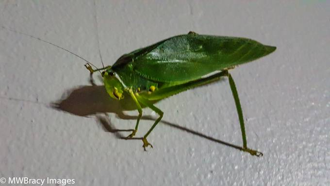 This guy was hanging outside of my room on the island of Dominica