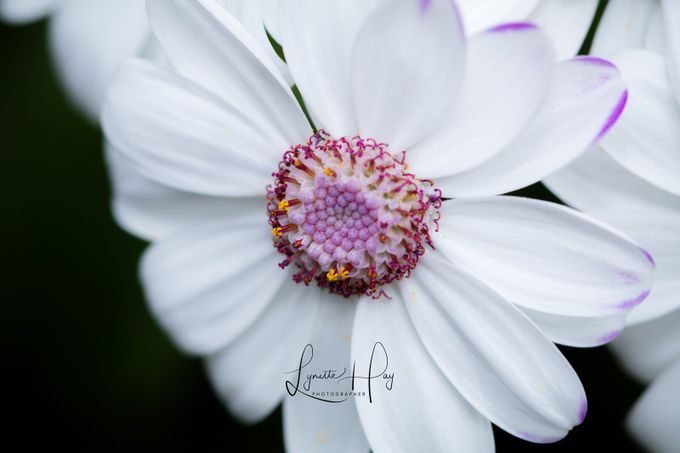 Winter White by niuhayan - Macro Games Photo Contest