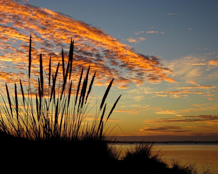 DSC02313 Rosebud sunset