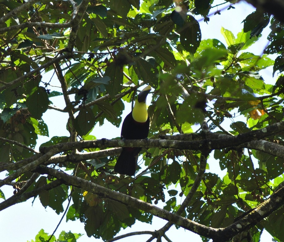 I can if Toucan