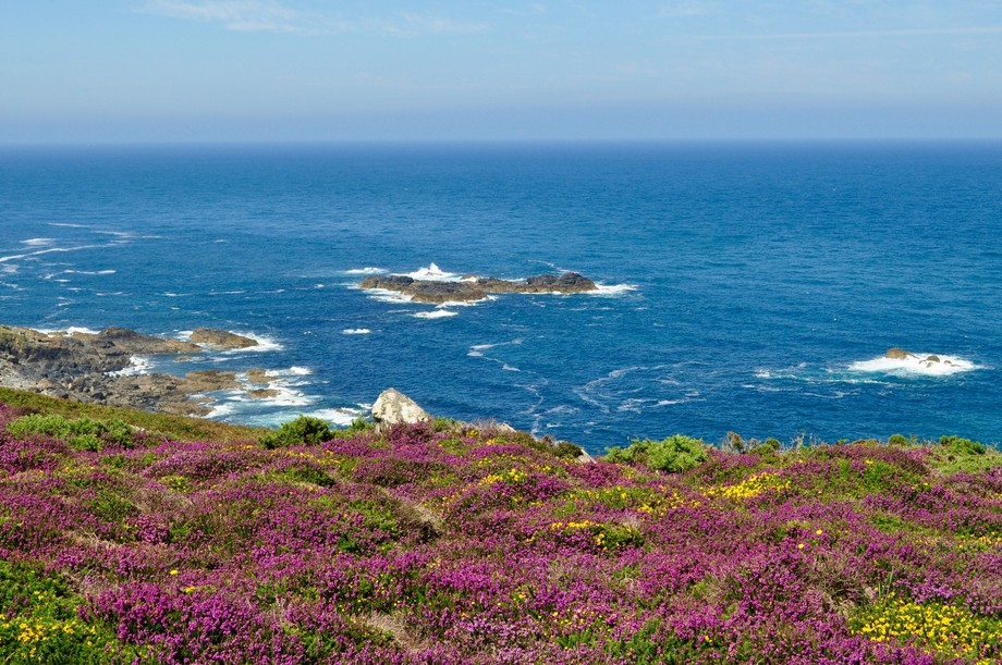 Cornish heather