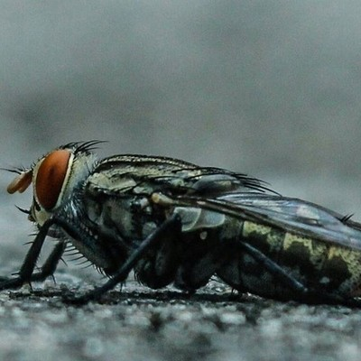 Fly... model of the day. . . . . . .......#macro #fly #canon #photog
