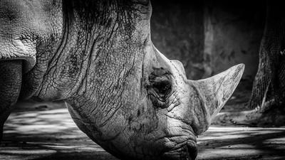 Rinocerontes del Zoo