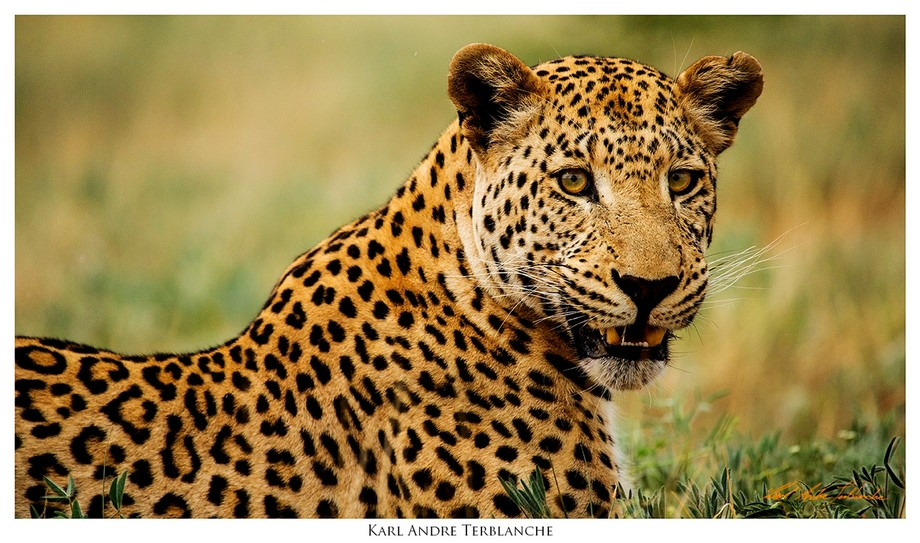 A simple portrait of a beautiful animal thanks to lovely diffused light on a rainy summers&#0...
