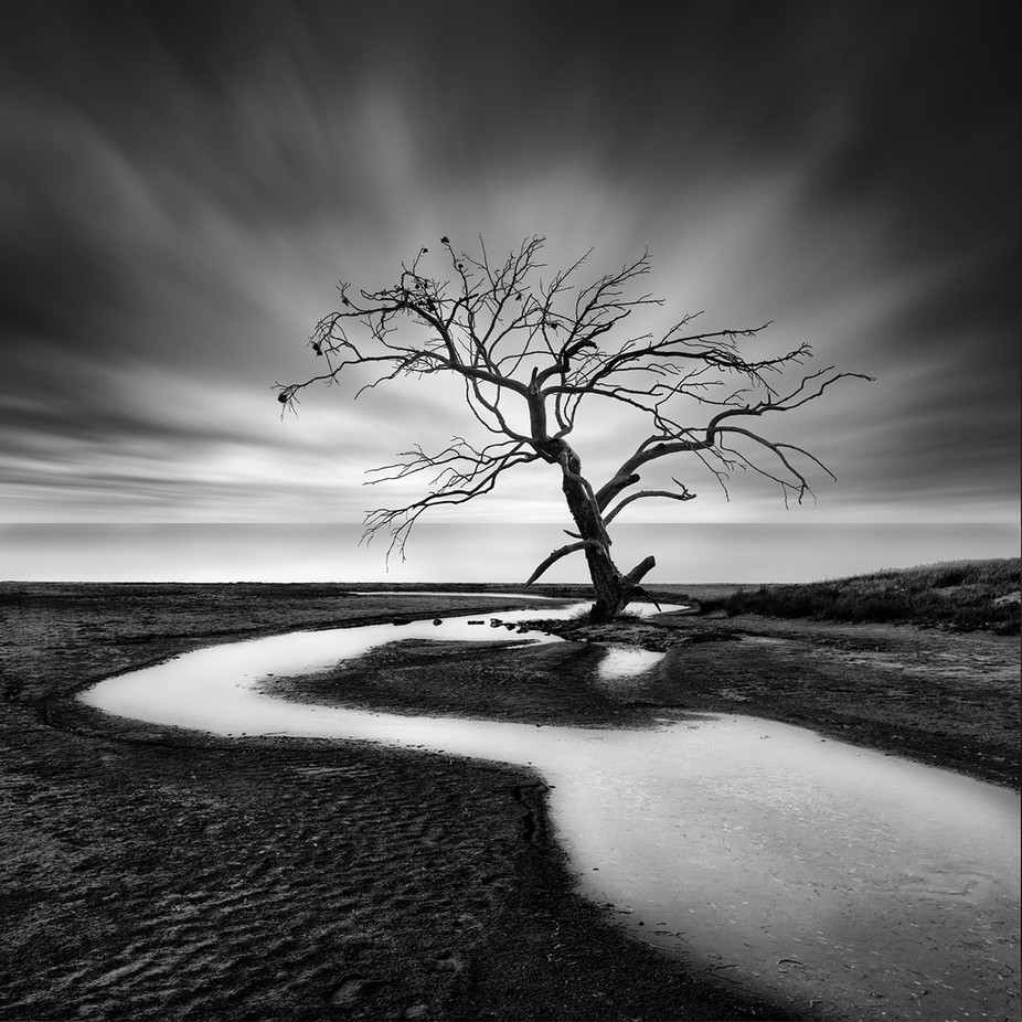 The Crying Tree by GeorgeDigalakis - Black And White Landscapes Photo Contest