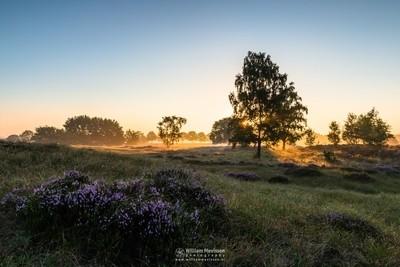 Heather Landscape Sunrise