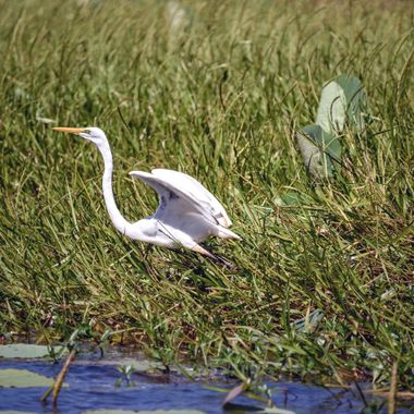 Wetlands Cruise (1) - Corroboree Billabong, Northern Territory, Australia