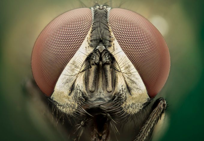 mosca by lucianorichino - Macro And Patterns Photo Contest